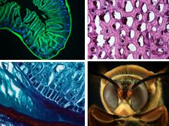Microscopy Gallery Link
