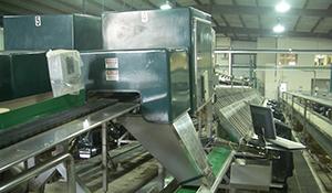 Asparagus machine