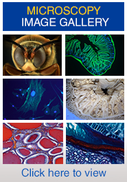 link to microscopy image gallery